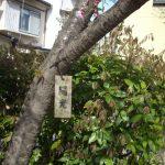高橋玄さんの「陽光桜~非戦の誓いを桜に託した、知られざる偉人の物語」<宇宙の心>と通じた未来経済を探究する!!